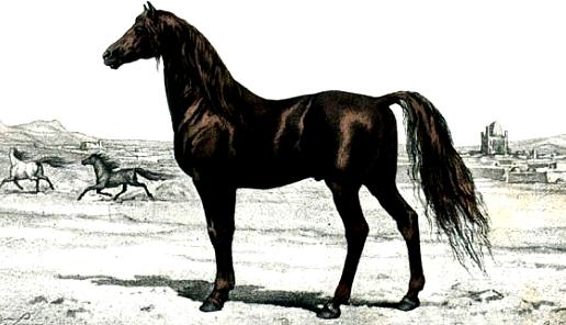 cheval noir