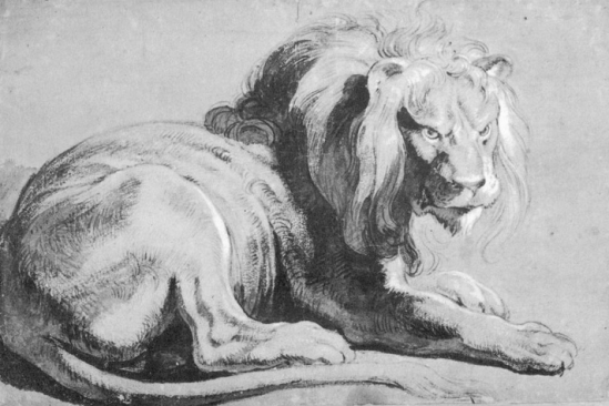 Lion-Rubens