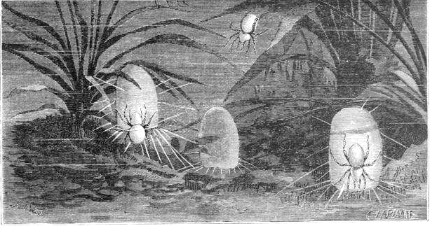 cloche-araignée