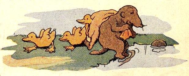 blaireau-taupe