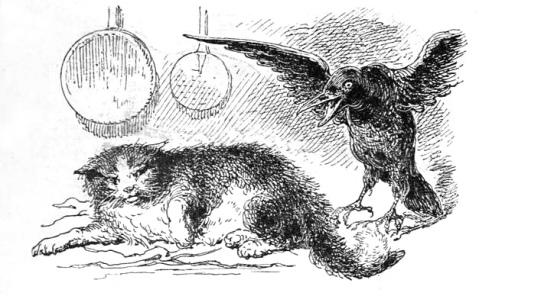 chat-corbeau