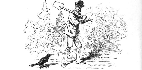 corbeau-jardinier