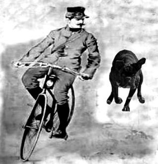 velo-chien