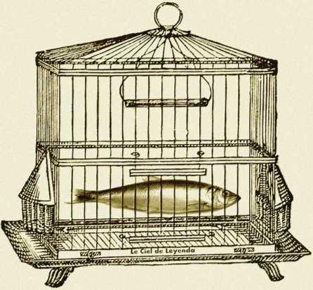 cage-hareng