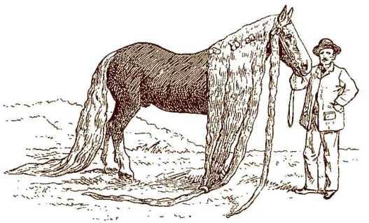 cheval-phénomène