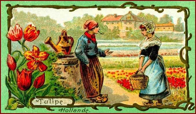 tulipes-hollande.