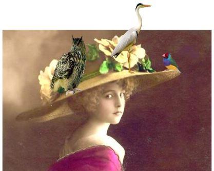 chapeau-oiseaux