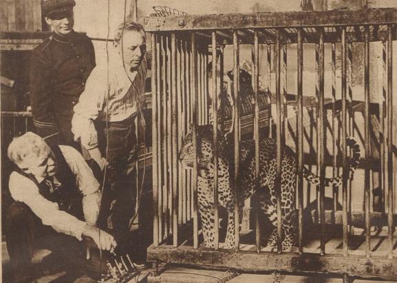 execution-leopard-david