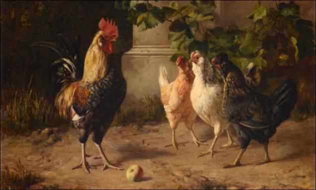 poules-coq