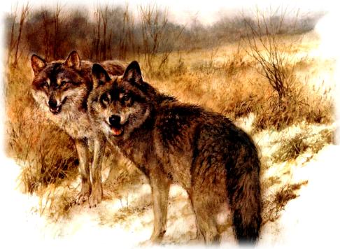 loups-peinture-rien-poortvliet