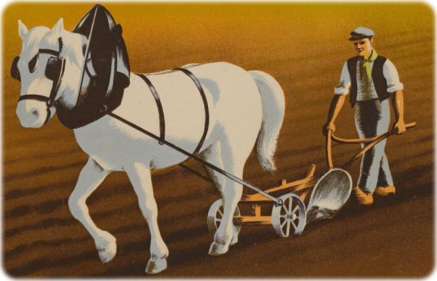 cheval-labour