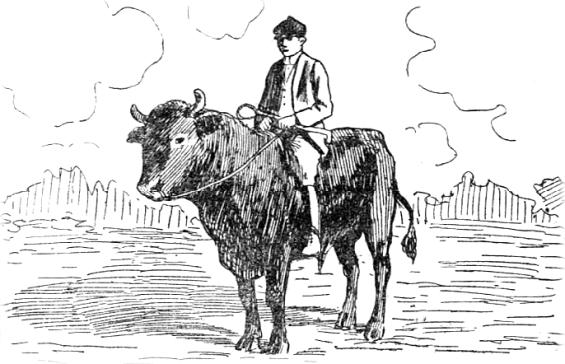 monture-taureau