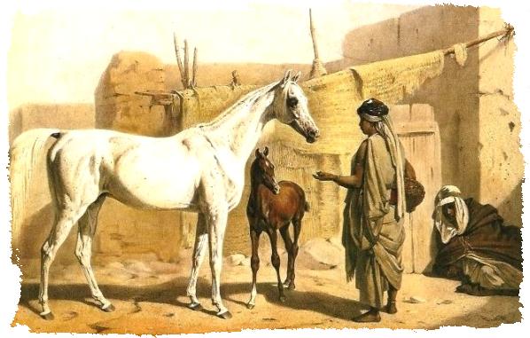 cheval arabe