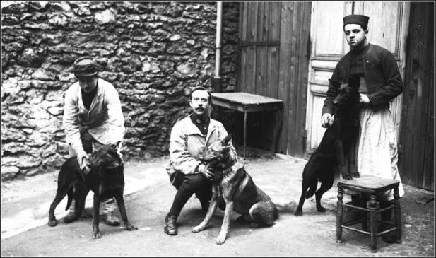 chiens_militaires