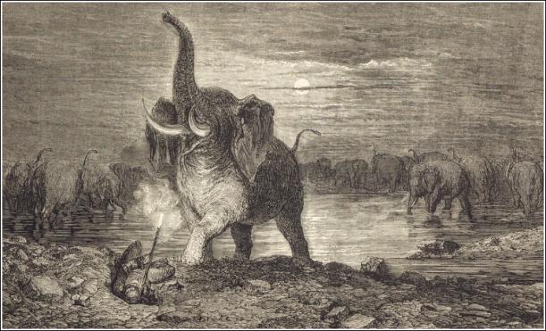 elephant-dore