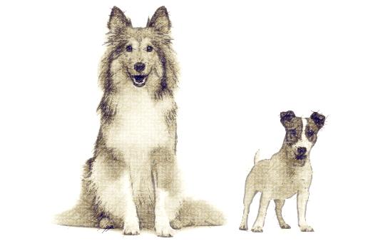2-chiens